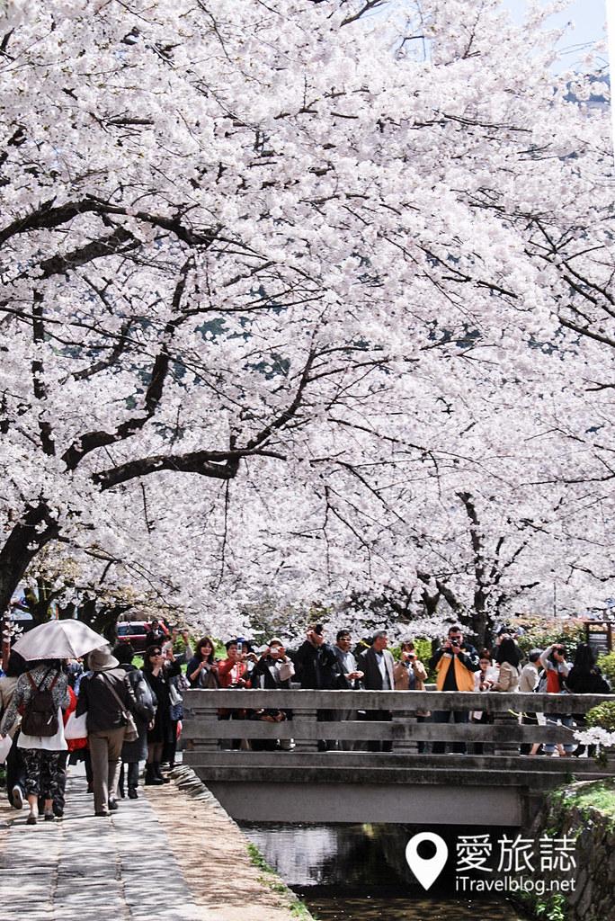 京都赏樱景点 哲学之道 20