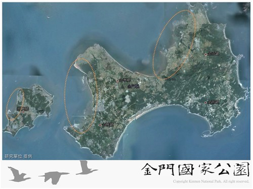 金門水鳥族群研究成果-05