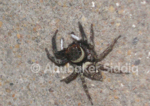 Color changing spider. right now black