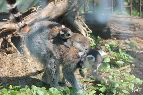 Zoo Bratislava 18.04.2015100