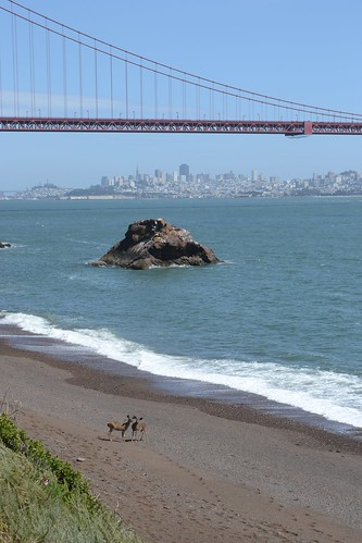 california city bridge red sea wild usa beach rock golden big sand gate san francisco rocks wildlife deer goldengate