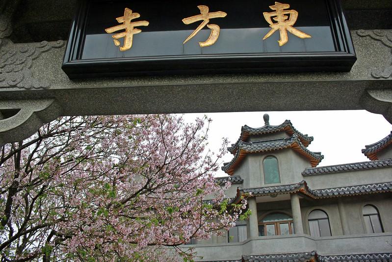 17度C在地景點春季推薦-東方室-櫻花 (7)