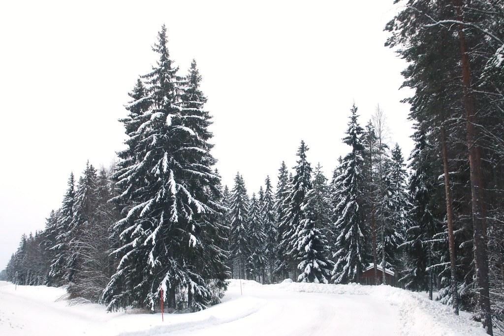 Finland313