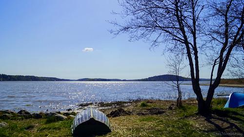 sea tree nature finland landscape bluesky balticsea bluesea seabay piikkiö sal1855