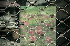 Frühling hinter Gittern