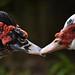 Beak to beak by Emanuel Papamanolis