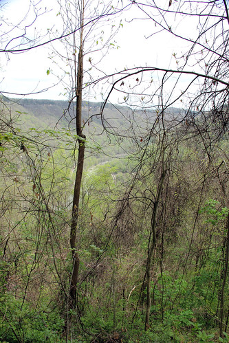 20150418_New_River_Gorge_007