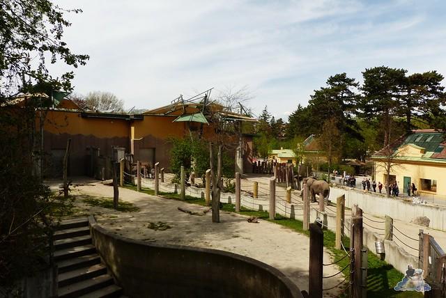 Tierpark Schönbrunn 16.04.2014 67