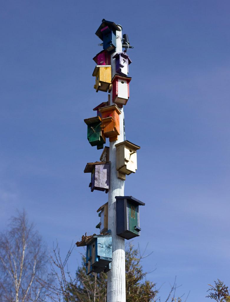 Bird house collective