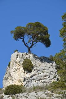 Petit arbre tout seul , la-haut dans la montagne!!!