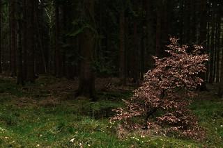 Autumn Leaves / Herbstlaub