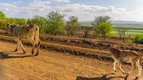 cac drivebyshootings southafrica2015 wakkerstroomtomkuze mkuze kwazulunatal southafrica za