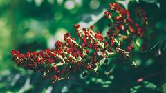 Dulce Rojo Natural