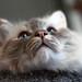 if i were a cat.......... by ~Craig~