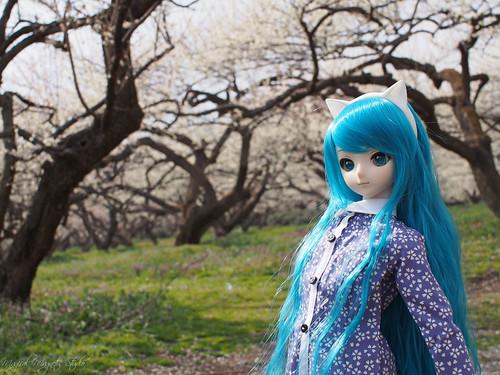 MIKU-Spring