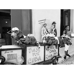 Life in Cuba  #havana #cuba #travel #lp #dog #monochromephotography  #bnw #dogs #bnw_captures #monochrome #bnw_magazine #bw_divine #cute #streetlife #traveling #travelgram #blackandwhitephotographylovers #blackandwhitephotography  #indahs_monochrome #inda
