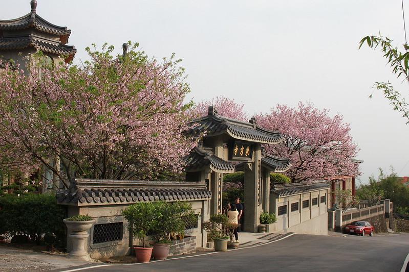 17度C在地景點春季推薦-東方室-櫻花 (25)