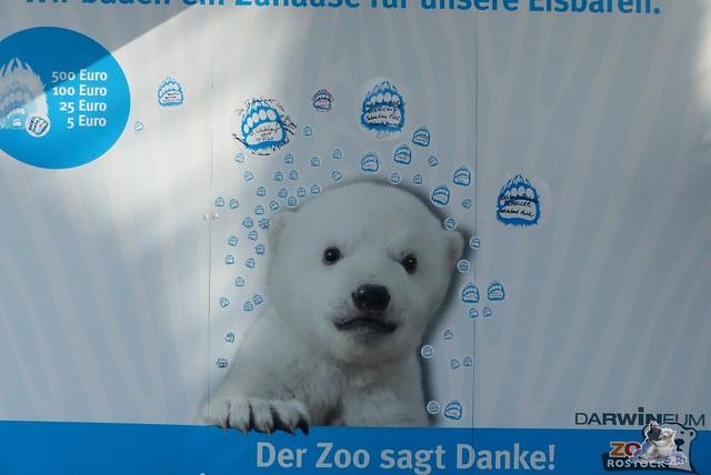 Eisbär Fiete Zoo Rostock 11.04.2015 Teil 1 8