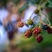 Very berry by VanveenJF