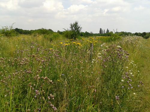 Gebietsbild, rund um den Landschaftspark Nohra , NGID763768355