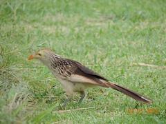 2015 01_Termas del Arapey_Pájaro en tierra