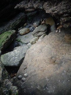 Pierres au creux d'un rocher - Côte d'Opale