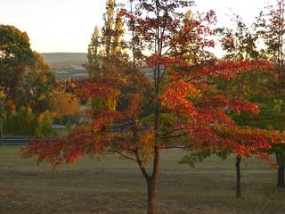 1P Mt Duval Autumn 729