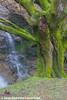 Cascada de Uguna, Parque Natural de Gorbeia 2015  #DePaseoConLarri #Flickr  -015