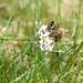 DSCF3429 Insektssesong :-) Bie. by Knut Erik R