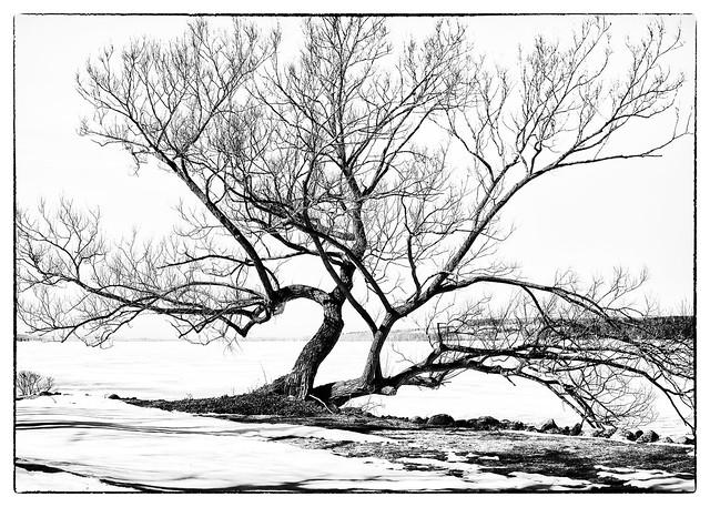 IMG_4030 Tree for Cyanotype 5x7