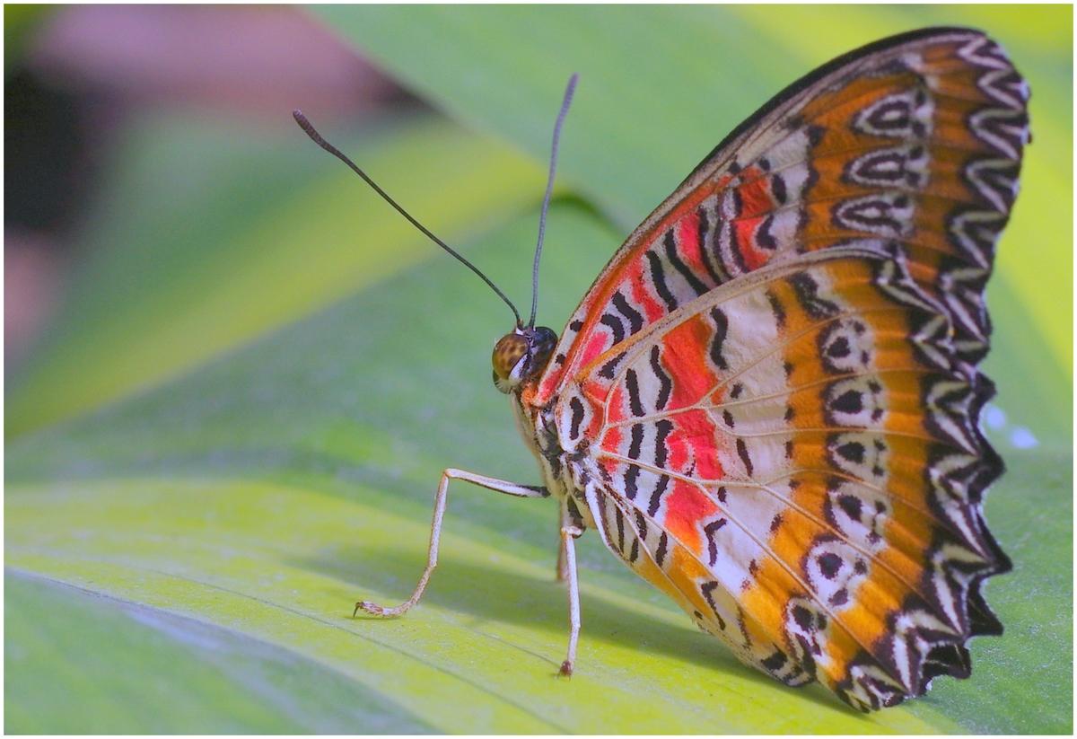 Papillons en Fêtes 2015 17010557411_e968ea8948_o