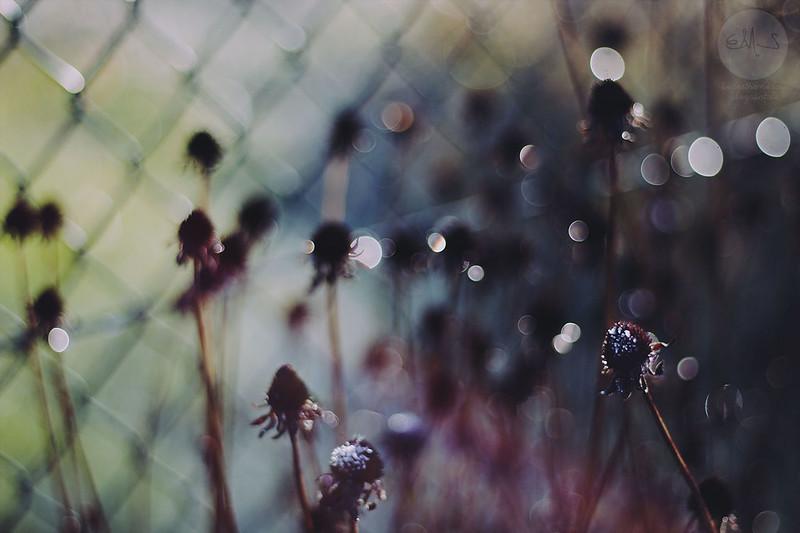 winterside (48) Kopie