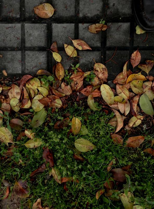 Mirando hojas caídas