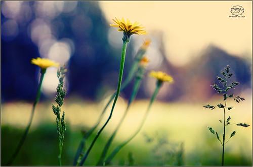 Spring dreams 6