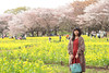 Photo:IMG_1092 国営昭和記念公園 花畑 By vicjuan