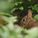 Bunny in the woods by Tammy Schild