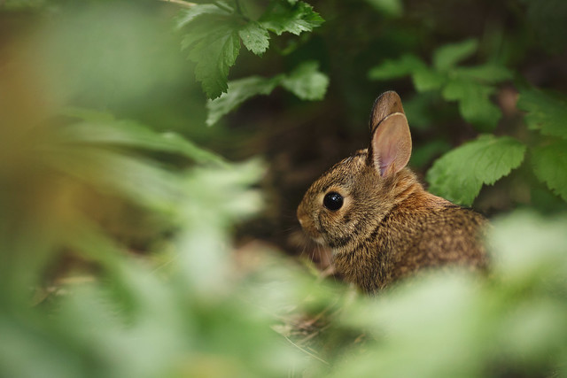 Bunny in the woods