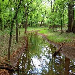 I like when Oklahoma gets all dressed up in her greenery. #okc #oklahomacity #oklahoma #spring #martinnaturepark
