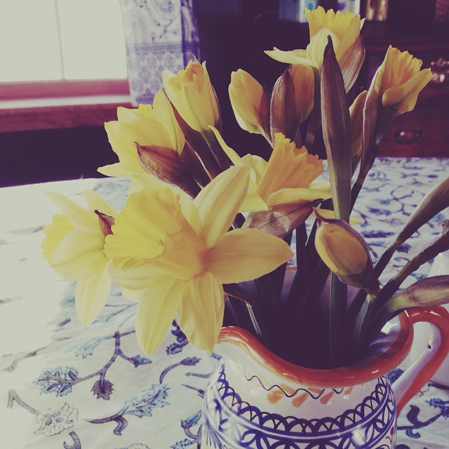 Olivia's birth flower. #18