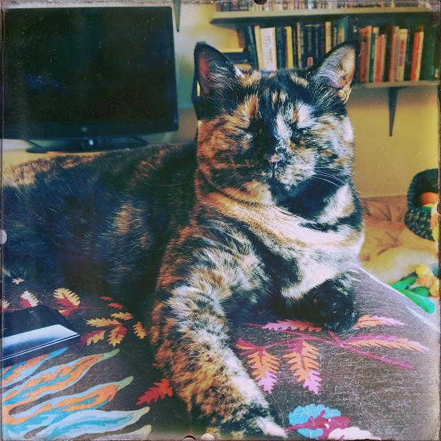 Polly Meditating