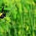 Black Loves Yellow and Green by MD. Rakib Islam