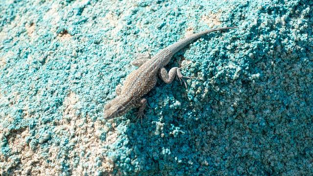Lizard w/blue camo, m313