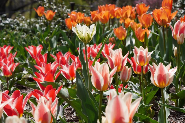 日, 2015-04-19 13:50 - Brooklyn Botanic Garden