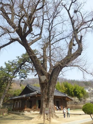 Co-Jeonju-Hanok-Hyanggyo-Confucius (11)