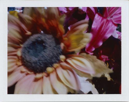 Pola-Pinhole Flowers