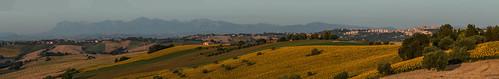 panorama sunrise alba country sunflowers marche macerata girasoli sibillini