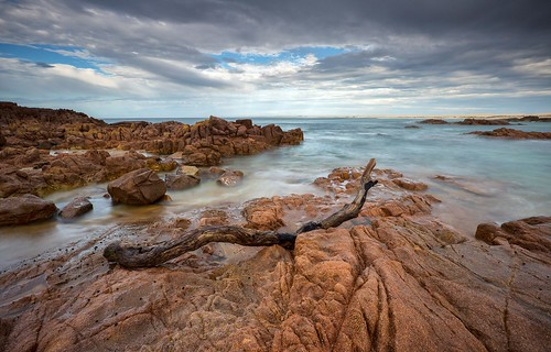 beach australia driftwood