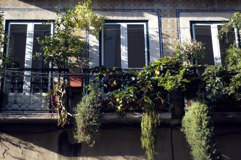 Janelas de Lisboa // Lisbon's Windows