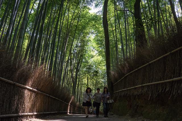 Sagano_BambooForest_04