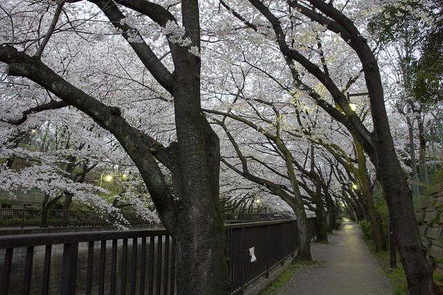 Tokyo Twilight - 板橋界隈 桜